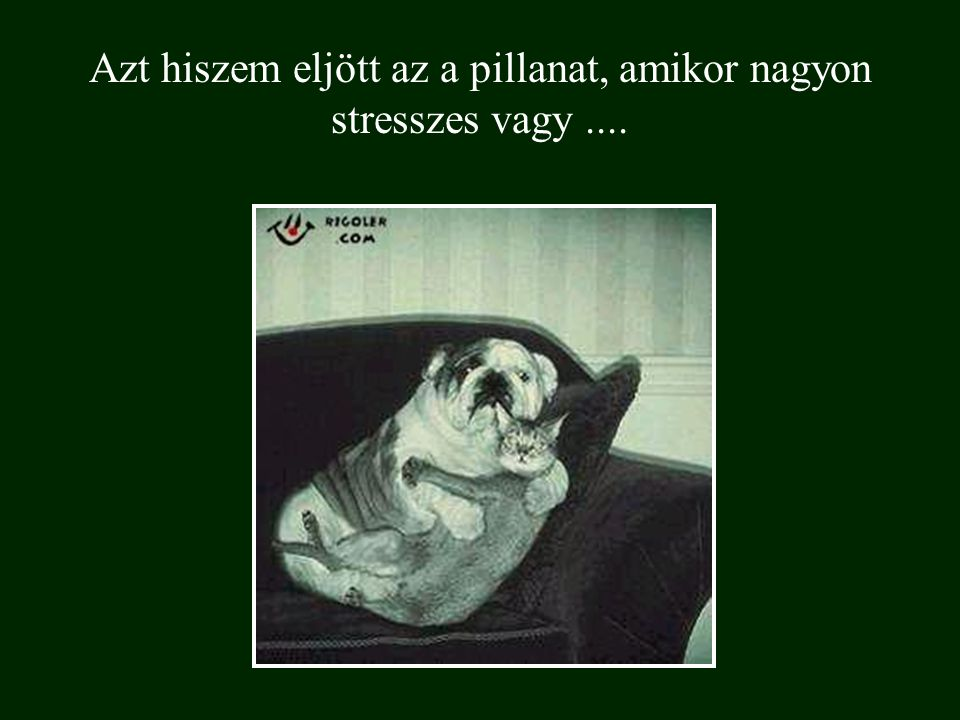 Azt hiszem eljött az a pillanat, amikor nagyon stresszes vagy ....