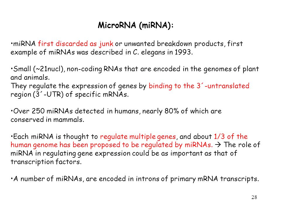 MicroRNA (miRNA): miRNA first discarded as junk or unwanted breakdown products, first example of miRNAs was described in C. elegans in 1993.