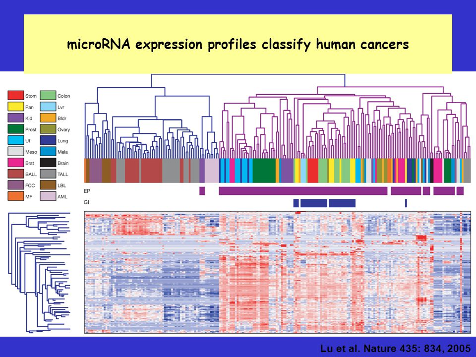 microRNA expression profiles classify human cancers