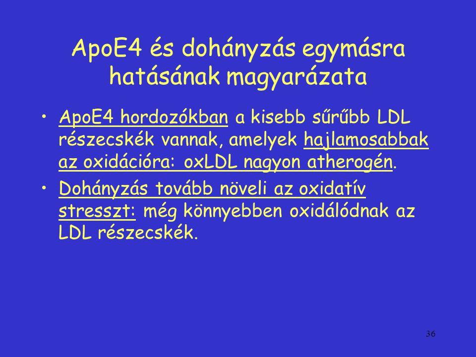 ApoE4 és dohányzás egymásra hatásának magyarázata