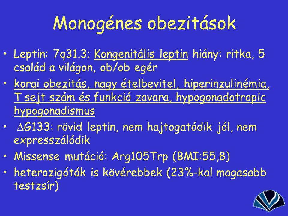Monogénes obezitások Leptin: 7q31.3; Kongenitális leptin hiány: ritka, 5 család a világon, ob/ob egér.