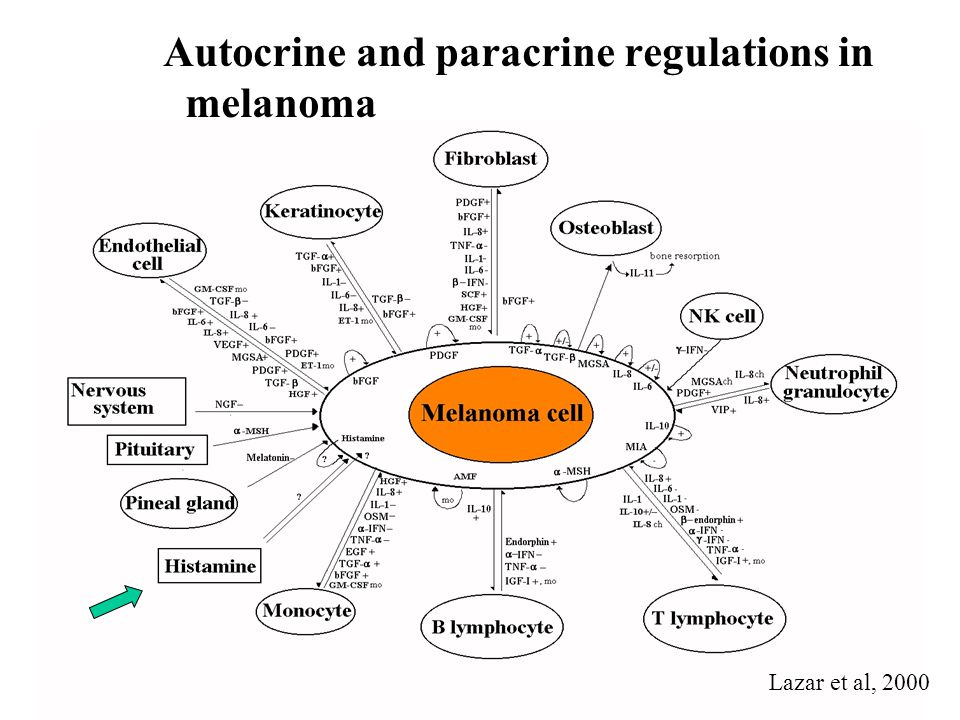 Autocrine and paracrine regulations in melanoma