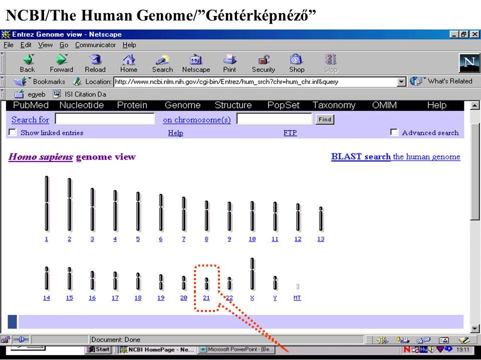 NCBI/The Human Genome/ Géntérképnéző