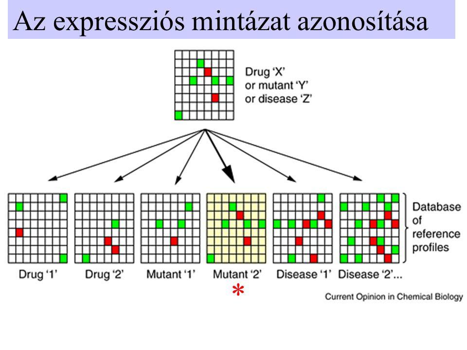 Az expressziós mintázat azonosítása