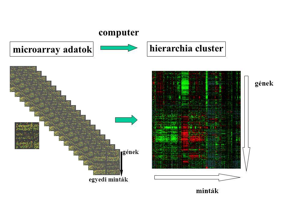 computer hierarchia cluster microarray adatok gének minták gének