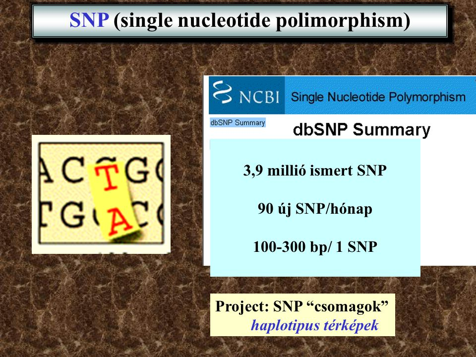 SNP (single nucleotide polimorphism)