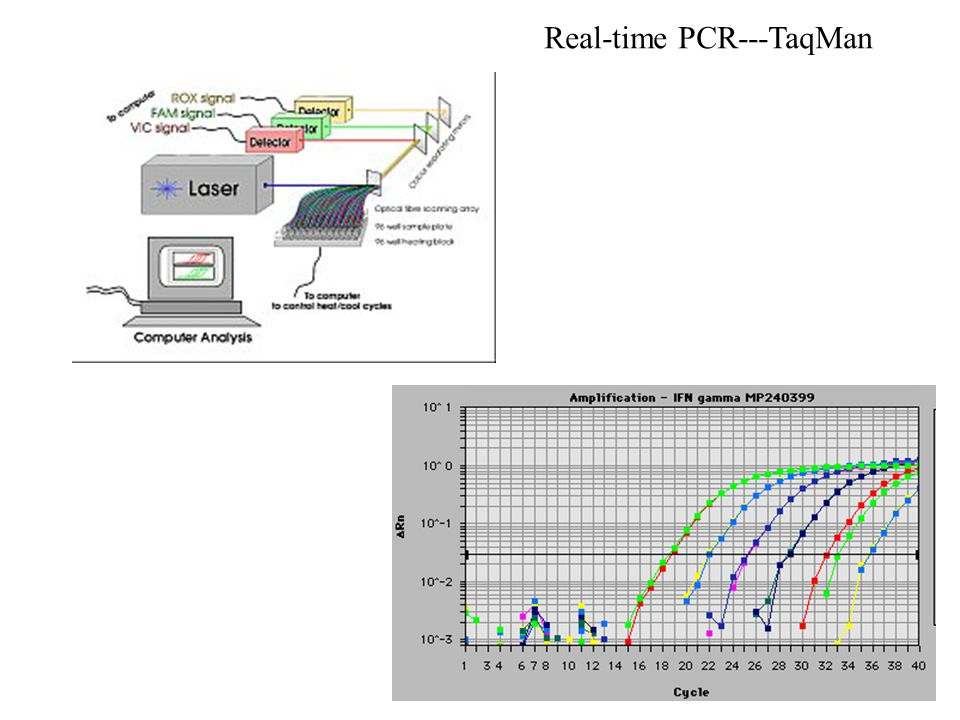 Real-time PCR---TaqMan