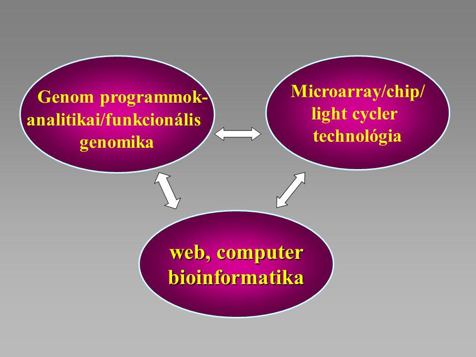 analitikai/funkcionális