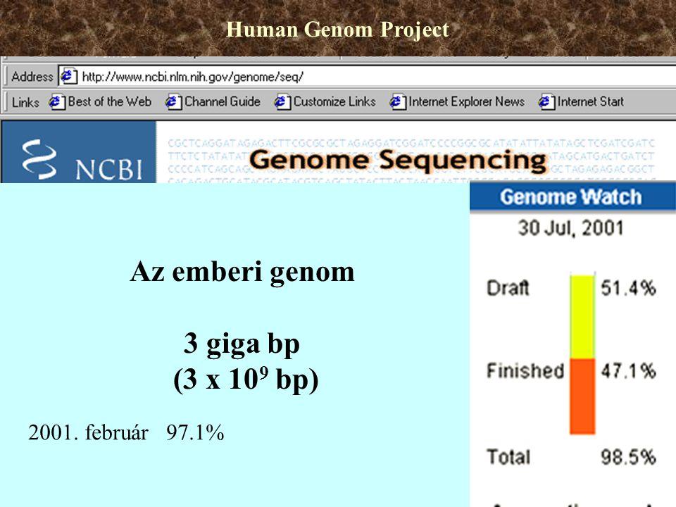 Az emberi genom 3 giga bp (3 x 109 bp)