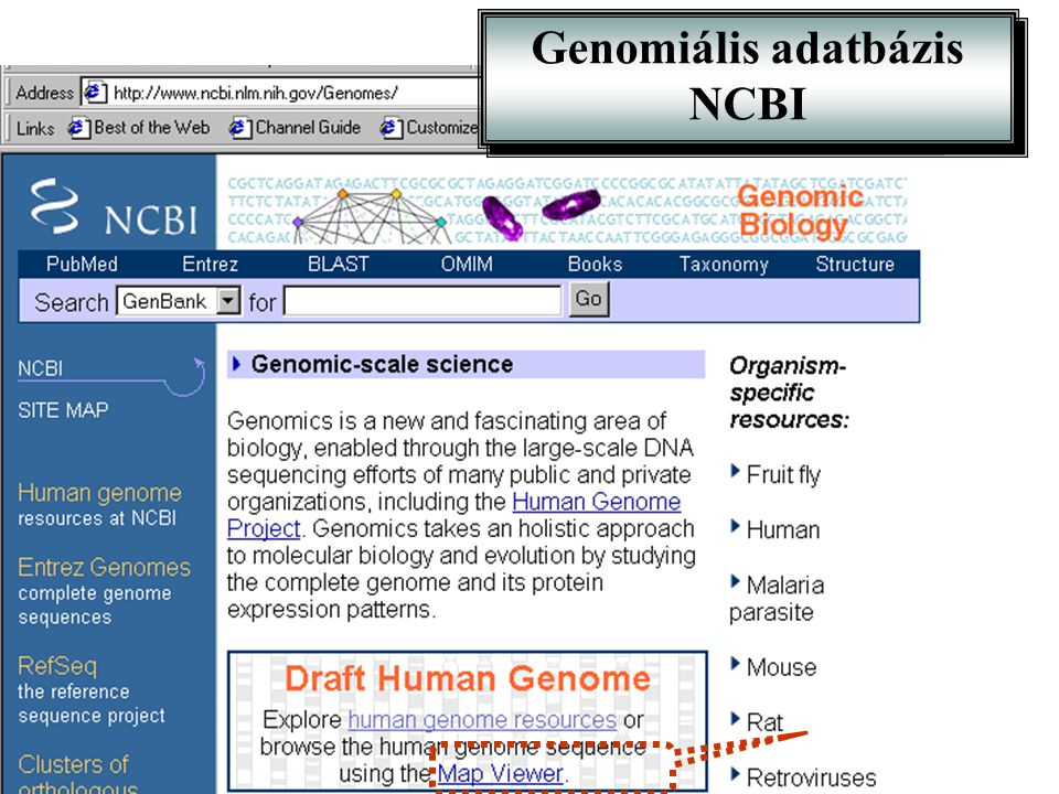 Genomiális adatbázis NCBI