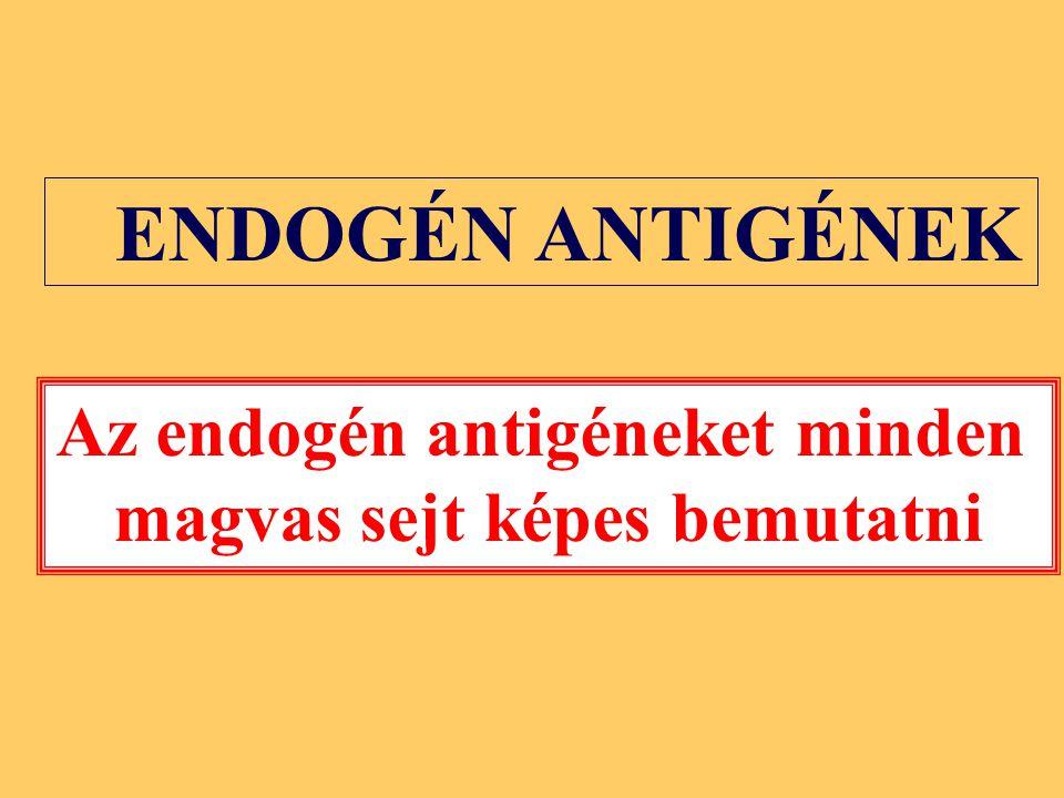 Az endogén antigéneket minden magvas sejt képes bemutatni