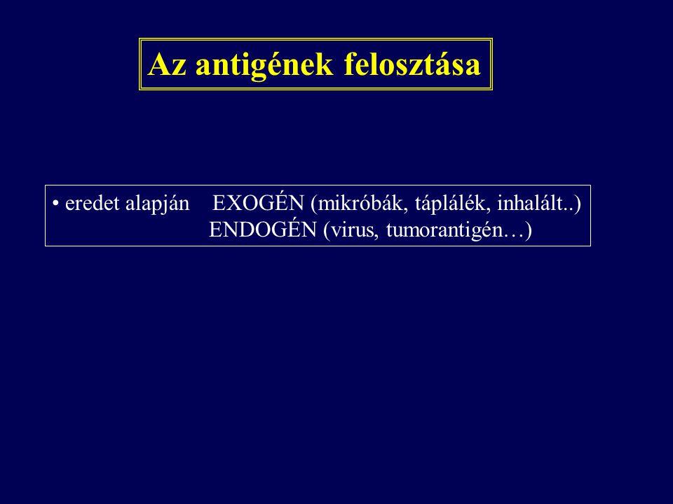 Az antigének felosztása