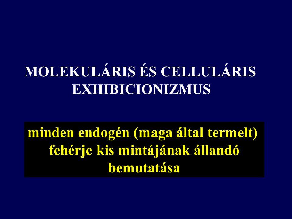minden endogén (maga által termelt) fehérje kis mintájának állandó