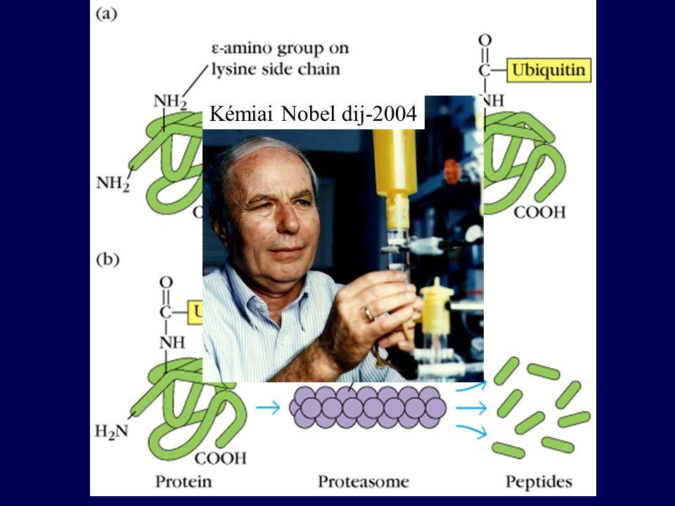 Kémiai Nobel dij-2004