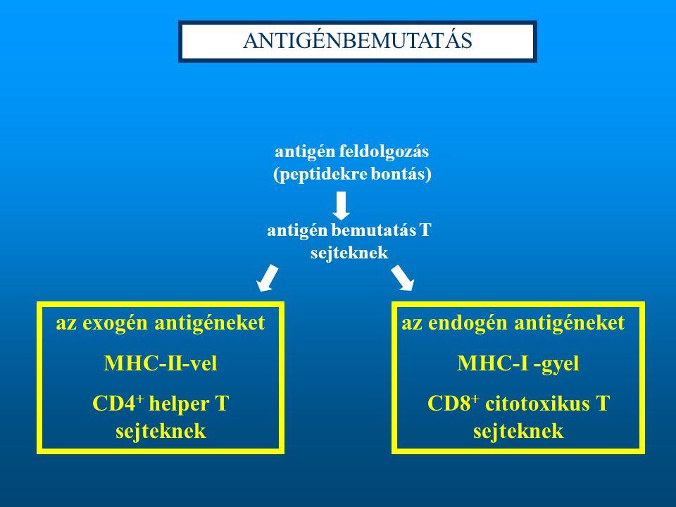 az endogén antigéneket MHC-I -gyel CD8+ citotoxikus T sejteknek