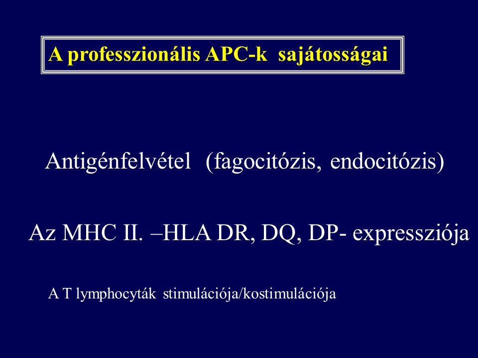 Antigénfelvétel (fagocitózis, endocitózis)