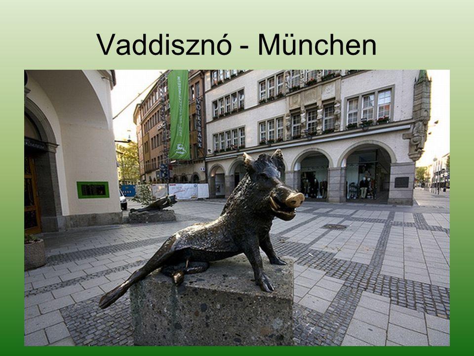 Vaddisznó - München
