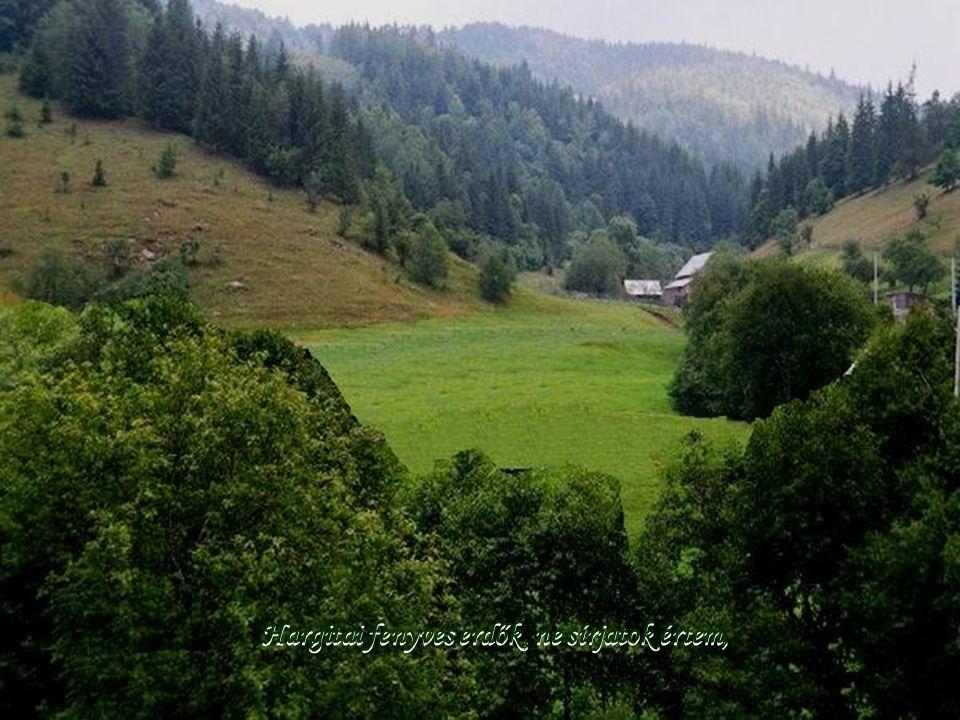 Hargitai fenyves erdők, ne sírjatok értem,