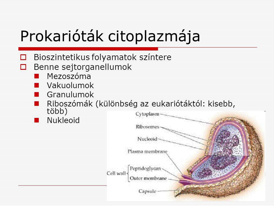 Prokarióták citoplazmája