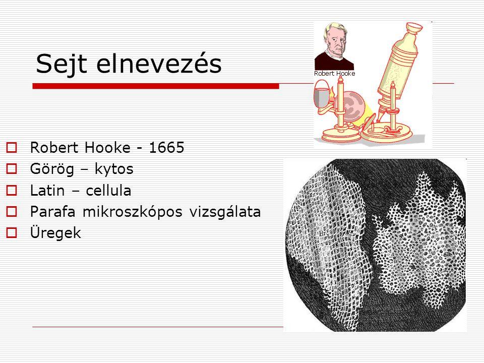 Sejt elnevezés Robert Hooke - 1665 Görög – kytos Latin – cellula