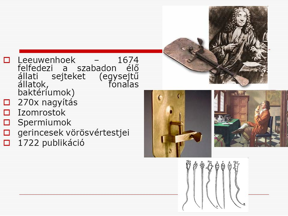 Leeuwenhoek – 1674 felfedezi a szabadon élő állati sejteket (egysejtű állatok, fonalas baktériumok)