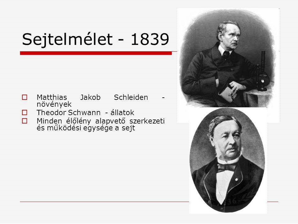 Sejtelmélet - 1839 Matthias Jakob Schleiden - növények
