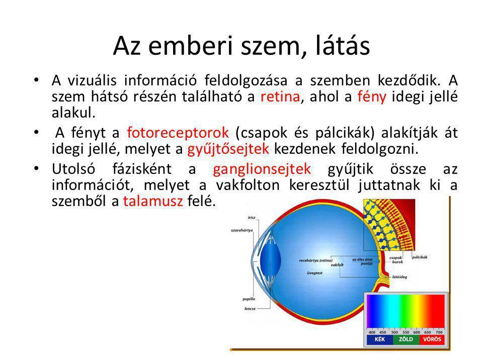 Az emberi szem, látás A vizuális információ feldolgozása a szemben kezdődik. A szem hátsó részén található a retina, ahol a fény idegi jellé alakul.