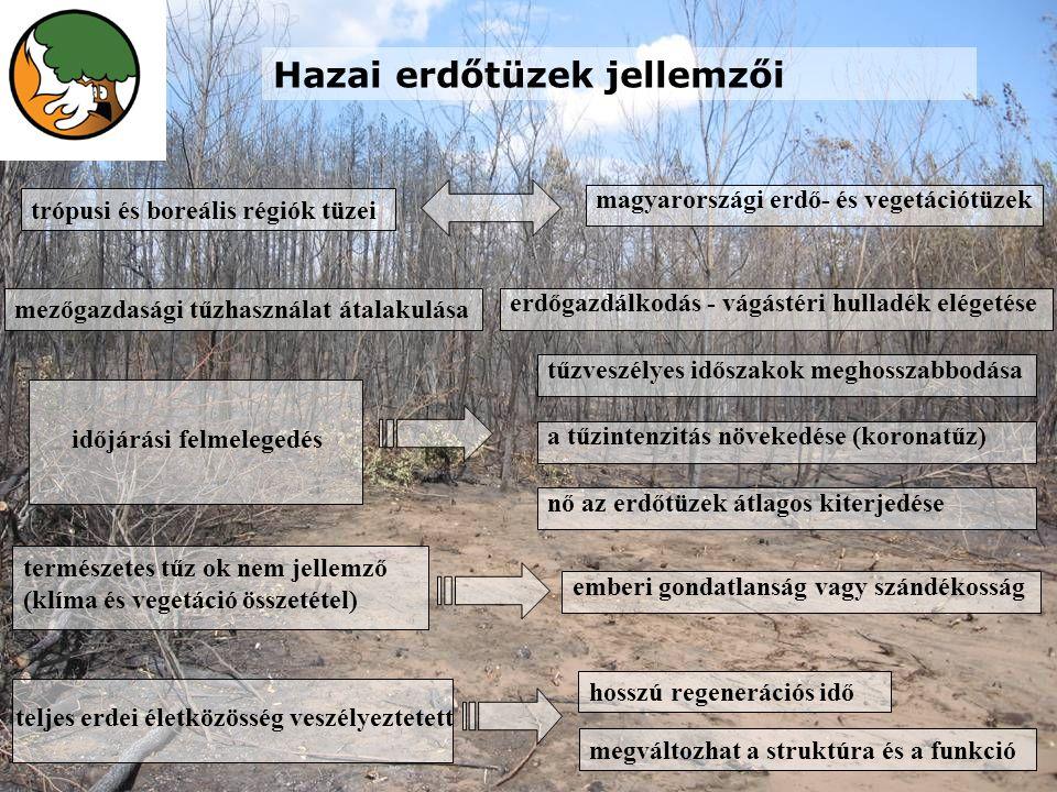 Hazai erdőtüzek jellemzői