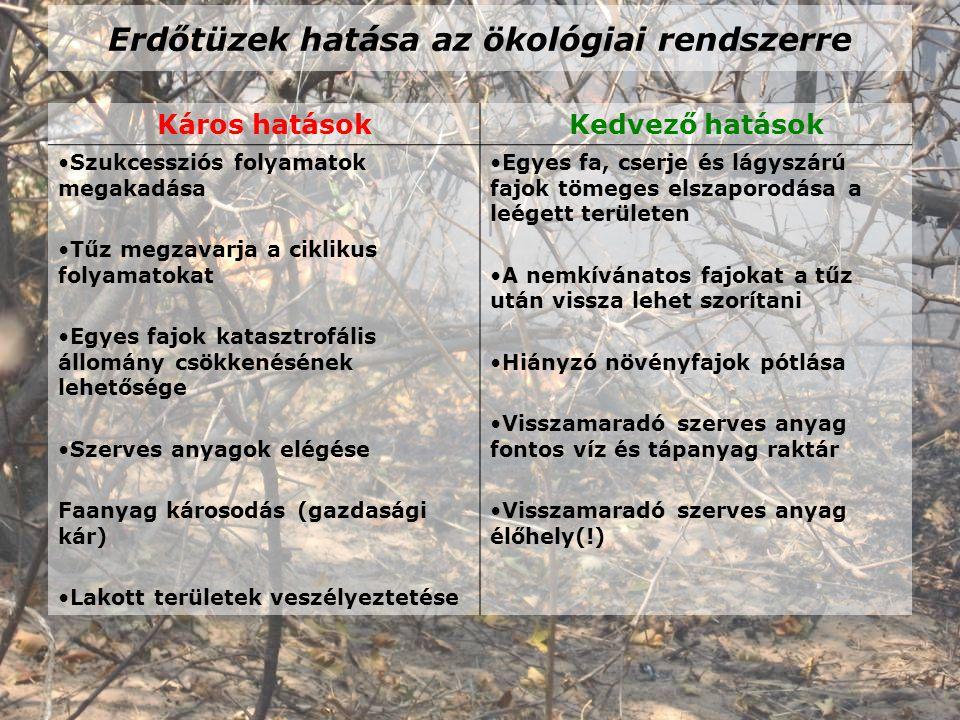 Erdőtüzek hatása az ökológiai rendszerre