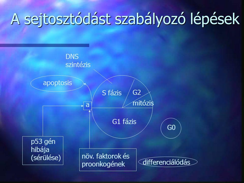 A sejtosztódást szabályozó lépések
