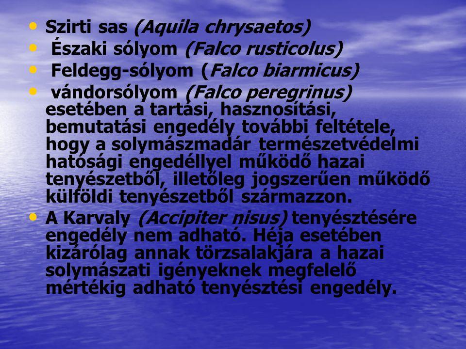 Szirti sas (Aquila chrysaetos)