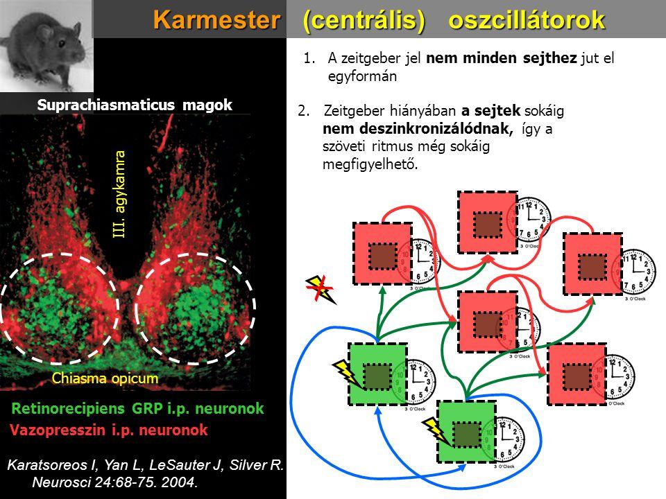 X Karmester (centrális) oszcillátorok