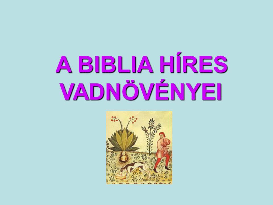 A BIBLIA HÍRES VADNÖVÉNYEI