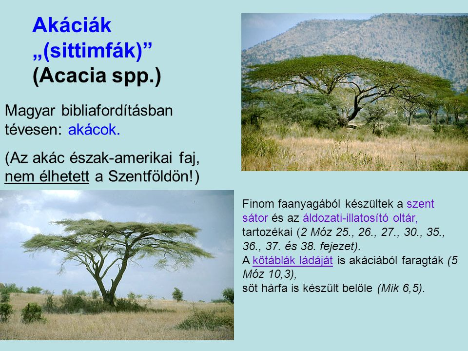 "Akáciák ""(sittimfák) (Acacia spp.)"