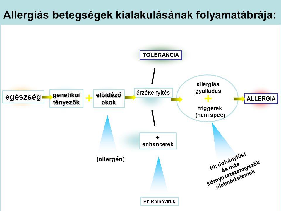 Allergiás betegségek kialakulásának folyamatábrája: