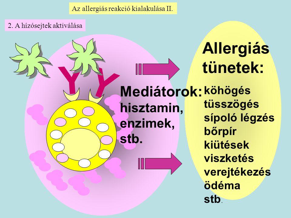 Y Allergiás tünetek: Mediátorok: hisztamin, enzimek, stb. köhögés