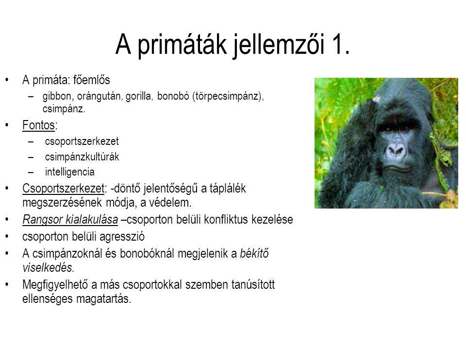 A primáták jellemzői 1. A primáta: főemlős Fontos: