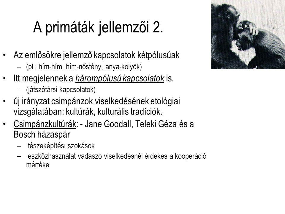 A primáták jellemzői 2. Az emlősökre jellemző kapcsolatok kétpólusúak
