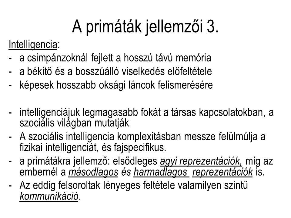 A primáták jellemzői 3. Intelligencia: