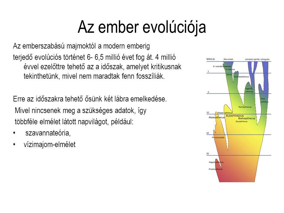 Az ember evolúciója Az emberszabású majmoktól a modern emberig