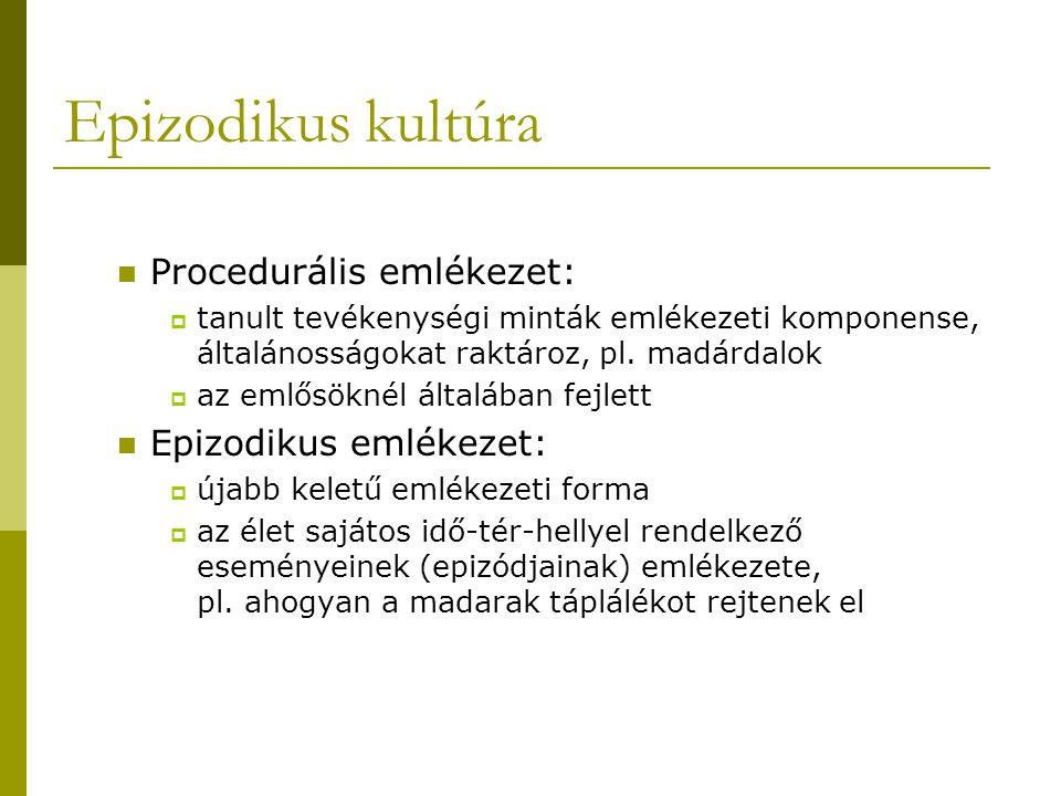 Epizodikus kultúra Procedurális emlékezet: Epizodikus emlékezet: