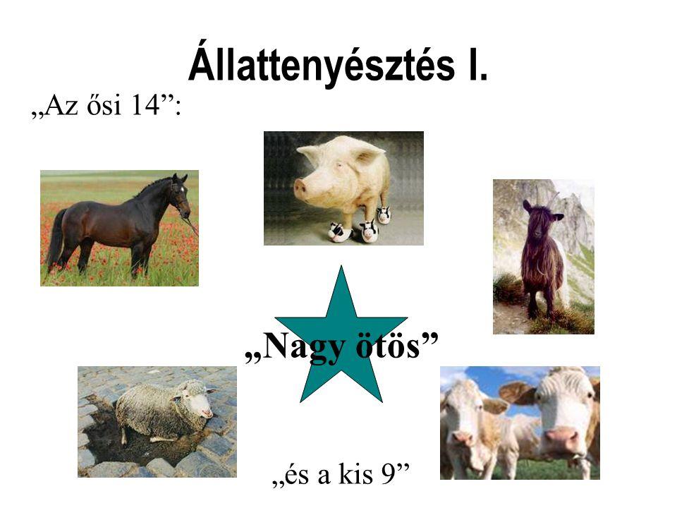 """Állattenyésztés I. """"Az ősi 14 : """"Nagy ötös """"és a kis 9"""