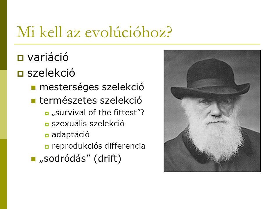 Mi kell az evolúcióhoz variáció szelekció mesterséges szelekció