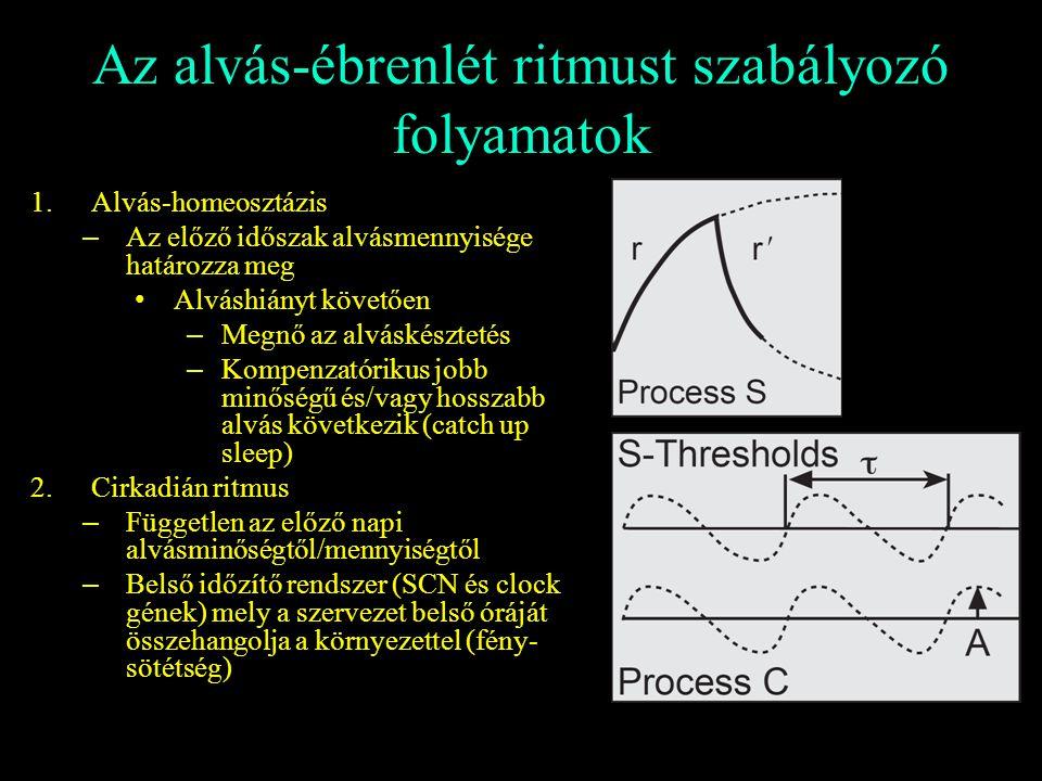 Az alvás-ébrenlét ritmust szabályozó folyamatok