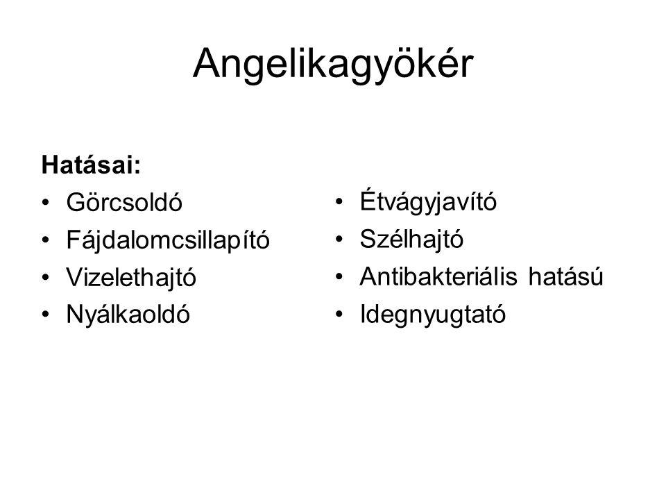 Angelikagyökér Hatásai: Görcsoldó Fájdalomcsillapító Étvágyjavító