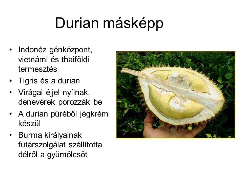 Durian másképp Indonéz génközpont, vietnámi és thaiföldi termesztés