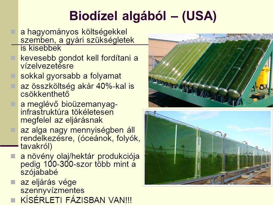 Biodízel algából – (USA)