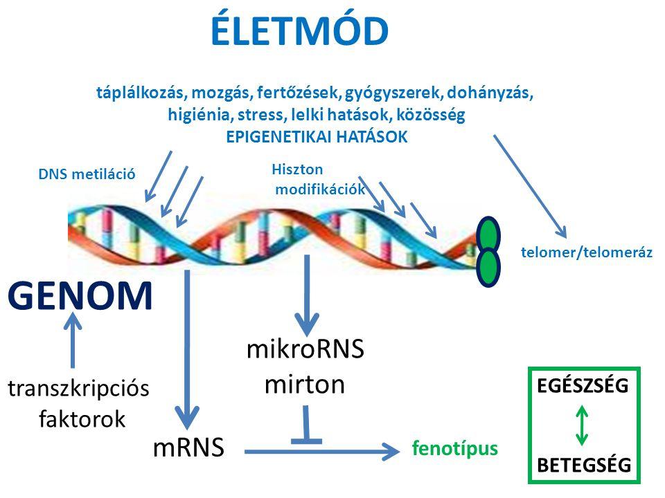 ÉLETMÓD GENOM mikroRNS mirton mRNS transzkripciós faktorok EGÉSZSÉG