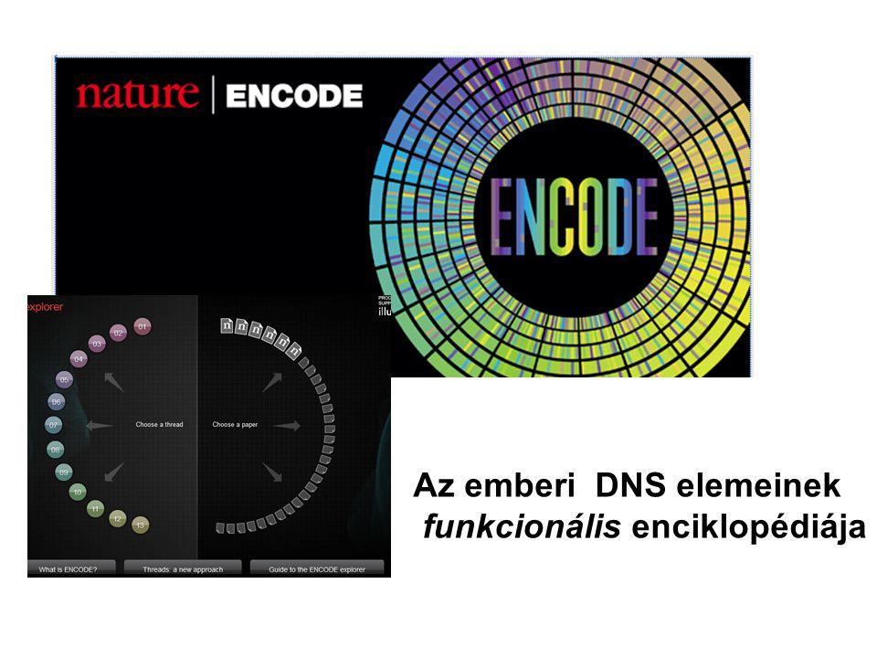 Az emberi DNS elemeinek