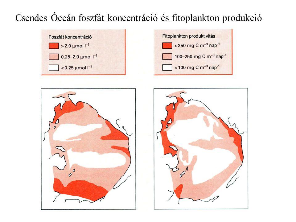 Csendes Óceán foszfát koncentráció és fitoplankton produkció